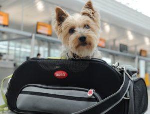 Авиаперевозка домашних животных